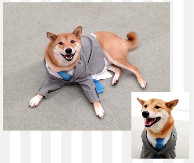 Bodhi, The Meanswear Dog